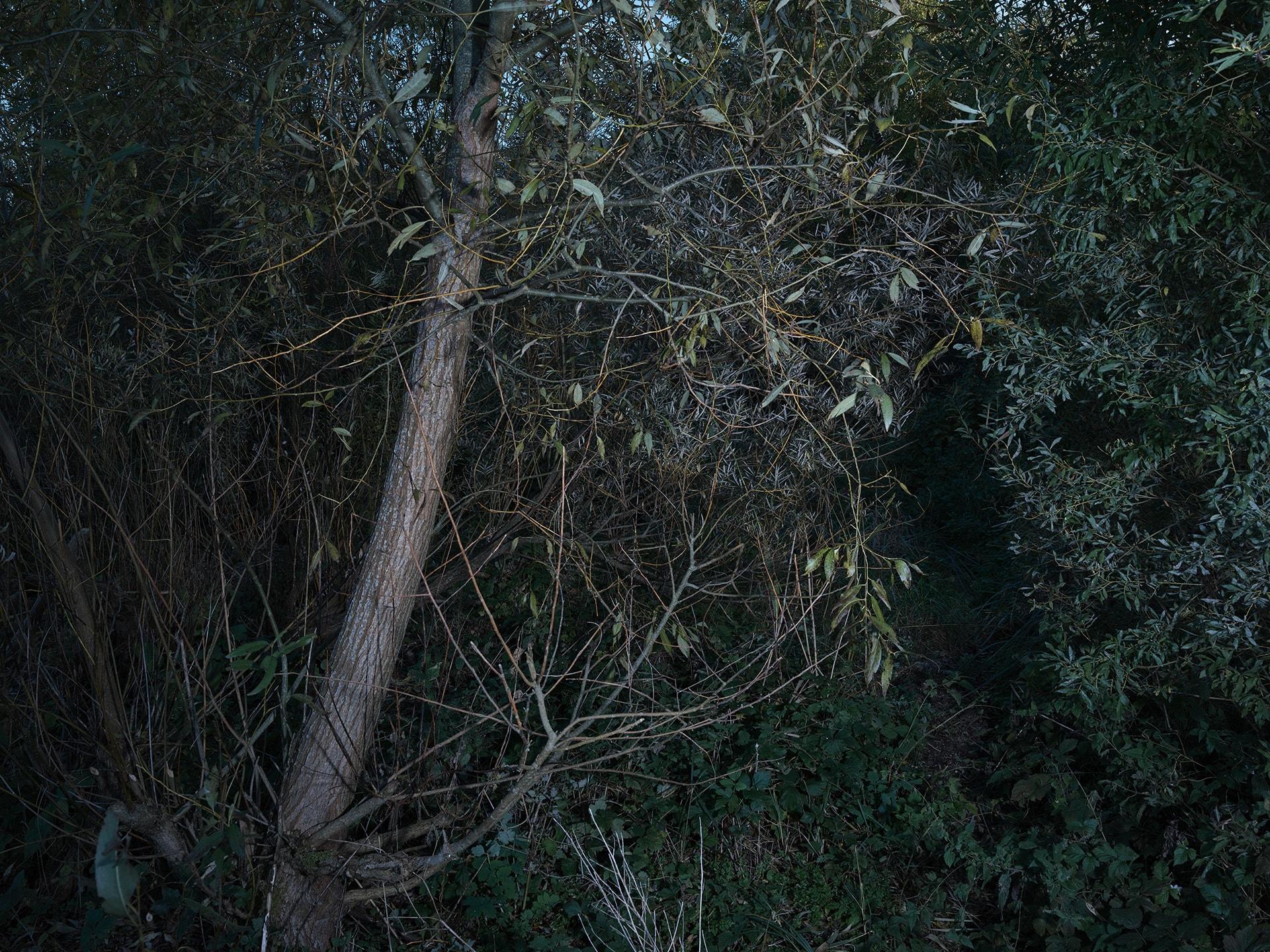 Kreidler-Birds